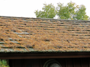 Someone should do something about this. These pine needles are knocking years off the life of this cedar shake roof by trapping moisture and encouraging the growth of microorganisms.
