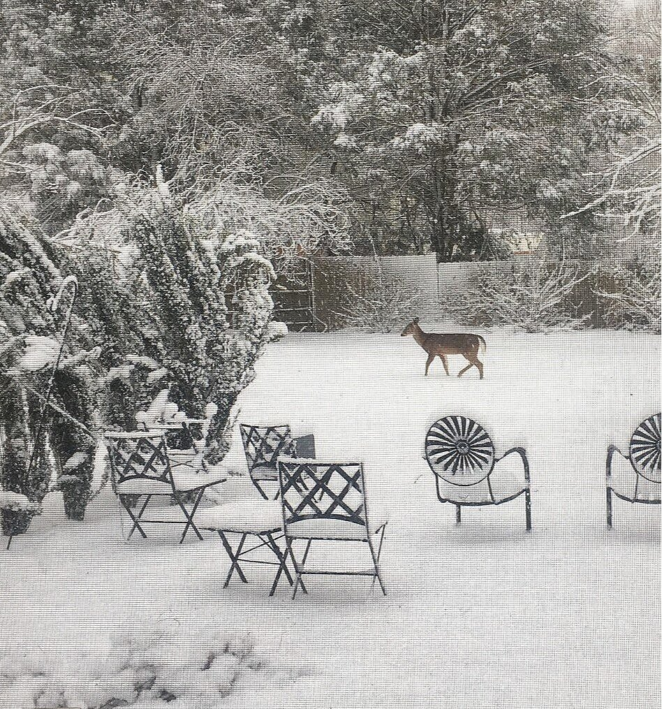 Ordinary fresh-fallen snow. This snow probably weighs about four pounds per cubic foot. Pay no attention to that deer.